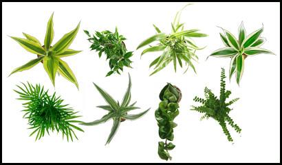 plant-mont