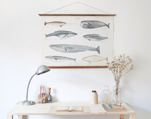 AVDD-Affiche Baleines