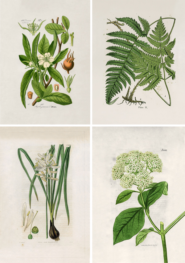 affiches botaniquesCL